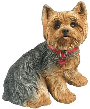 Large Sitting Yorkshire Terrier