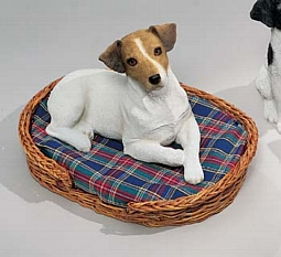 Brown and White Jack Russell