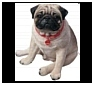 Pug Statues, Sculptures and Figurines