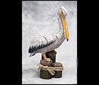 White Pelican on Wooden Posts, Coastal Pelican on Posts
