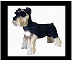 Standing Schnauzer Statue - Colored