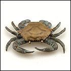 Our sea themed door knockers includes this brass door knocker for a coastal decor theme.