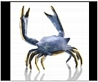 Fighting Blue Crab Figurine