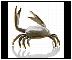 Fighting Dungeness Crab - Brass